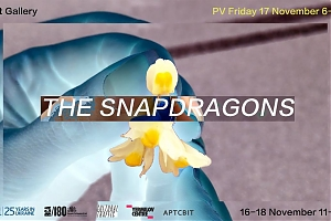 "Video installation ""The Snapdragons"""